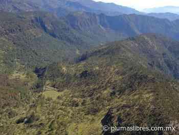 Pobladores podrían enfrentarse a taladores del Pico de Orizaba; «entraron con permiso y armados a cortar 372 hectáreas - plumas libres