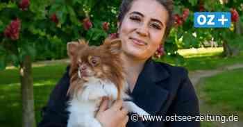 Vom Wohnungs- zum Wachhund oder auch: eine Reise von Rostock nach Wittstock - Ostsee Zeitung