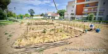 Un nouveau jardin partagé vient de sortir de terre à Antibes