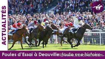 Poules d'Essais à Deauville: les destins tumultueux des vainqueurs en ligne droite - France-sire