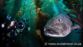 Bluewater University Launches as a New Online Portal for Underwater Education - SCUBA News