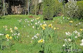 Im Traumgarten der Jerneys - Passauer Neue Presse