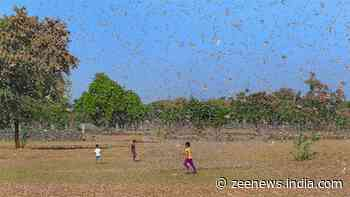 PM Narendra Modi assures help to all states affected by locust attack