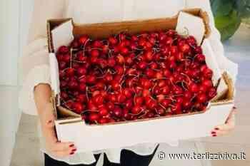 Spot per le ciliegie terlizzesi da Giorgia Meloni - TerlizziViva