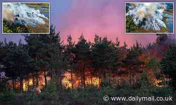 Families are warned not to picnic in woodland after flames catch hold at popular beauty spot