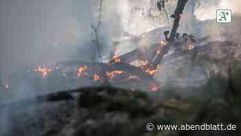 Hamburg: Waldbrand in Heimfeld: 200 Quadratmeter Unterholz in Flammen