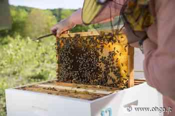 Bruciate le arnie con 10mila api a Ercolano: sono morte tutte a causa delle fiamme - Ohga!