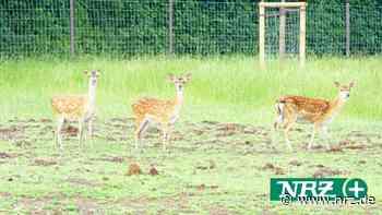 Tierpark Weeze hat mit Vandalismus zu kämpfen - NRZ