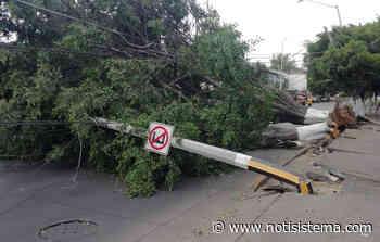 Viento derribó frondoso árbol en el cruce de Javier Mina y la 52 - Notisistema