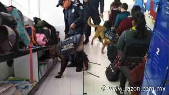 Con binomios caninos, policia municipal revisa mochilas en Torreon - La Razon