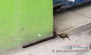 Robos a la orden del día en Rioverde - Plano informativo