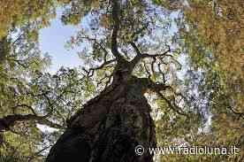 Parco Ausoni, risorse per salvare la sughereta San Vito a Monte San Biagio - Lunanotizie