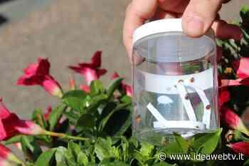Alba: 5.600 coccinelle per la difesa biologica integrata di alberi e piante (FOTO) - IdeaWebTv