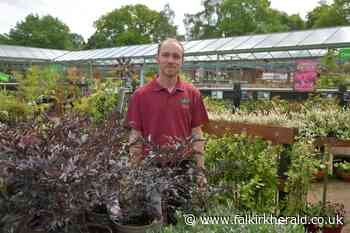 Anticipation is growing for Larbert garden centre's grand re-opening - Falkirk Herald