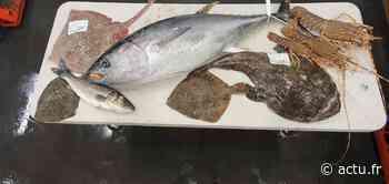 Toulouse. Ils livrent à domicile, en moins de 24 heures, des poissons de la Méditerranée - Actu Toulouse