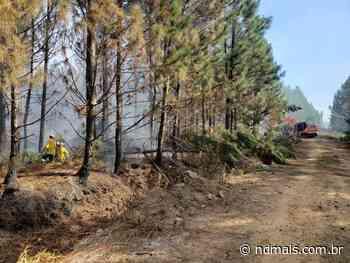 Área de reflorestamento em Barra Velha tem novos focos de incêndio - ND - Notícias