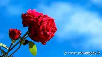 2 giugno, deposizione di rose rosse per le Madri Costituenti