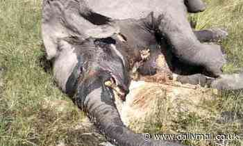 Poaching ruled out as 110 elephants found dead in Botswana