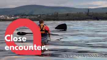 Amazing footage shows kayker's close encounter with basking shark