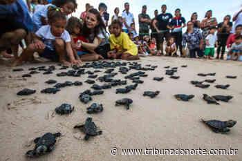 Base do Projeto Tamar em Parnamirim/RN é extinta pelo ICM Bio - Tribuna do Norte - Natal