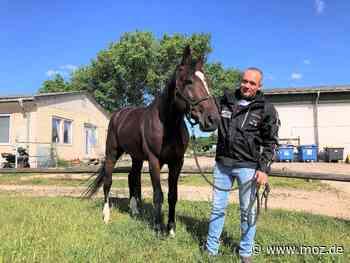 Galopprennen: Pferdesportler begeistert von Neuenhagen - Märkische Onlinezeitung