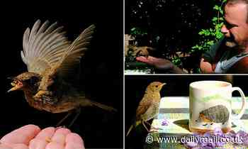 Seeking the healing balm of nature in lockdown, author HUGH WARWICK set out to tame a young robin...