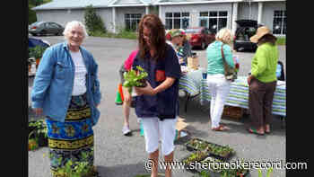 Township Grandmothers' plant sale is on at the Sutton Saturday Market - Sherbrooke Record