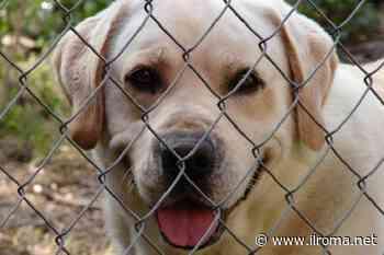 Napoli, al via programma itinerante anagrafe canina - ROMA on line