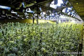 Cannabisplantage met 1.000 plantjes opgerold in Oostkamp (Oostkamp) - Het Nieuwsblad