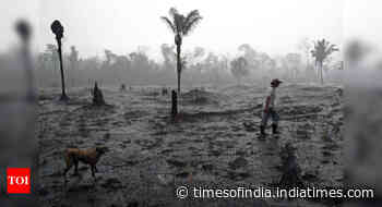 No let-up in global rainforest loss as coronavirus brings new danger