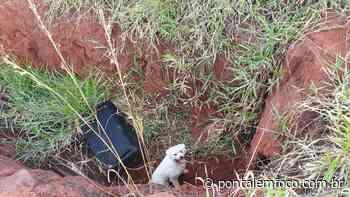 Cão cai em valeta e é resgatado pelo CBMMG em Ituiutaba - Pontal Emfoco