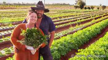 Edible herb bouquet business blooms for Bundaberg farmers - ABC News