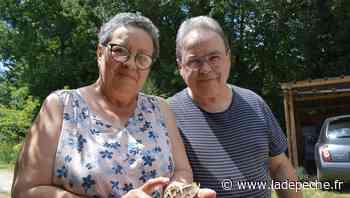 VIDEO. Près de Cahors, ils découvrent un papillon impressionnant dans leur jardin - LaDepeche.fr