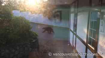 RCMP warn of black bear in View Royal - CTV News VI