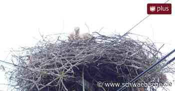 Der Storch kehrt nach Bopfingen zurück - Schwäbische