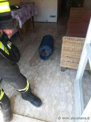 FOTO | Martinsicuro, scoppia una bombola del gas sul balcone di un'abitazione: nessun ferito | ekuonews.it - ekuonews.it