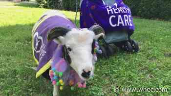 Farm animals visit Creekview Nursing and Rehabilitation