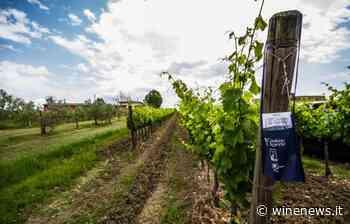 Cantine Aperte 2020, il brindisi social più grande d'Italia, firmato Movimento Turismo del vino - WineNews
