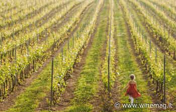 Cantine aperte insieme, brindisi online da record con il Movimento turismo del vino - WineMag.it