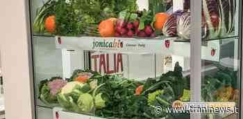 Esposizione di merce al di fuori degli esercizi commerciali obbligatoria solo per prodotti alimentari - Trani News