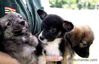 Campanha do Agasalho Animal segue até 30 de junho em Blumenau - Farol Blumenau
