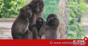 Stubenberg am See: Babyboom in der Tierwelt Herberstein - Kleine Zeitung