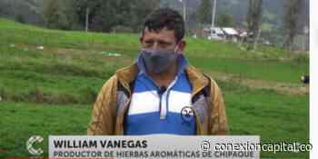 Productores de hierbas aromáticas de Chipaque en crisis - Canal Capital