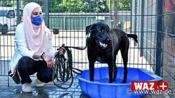 Gelsenkirchen: Neuer Auslauf für die Hunde im Tierheim - WAZ News