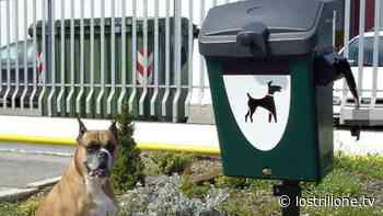 Torre del Greco. In arrivo 17 cestini per la raccolta di deiezioni canine - Lo Strillone