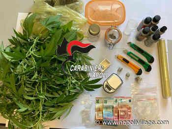 Monteruscello di Pozzuoli, aveva una pianta di cannabis all'interno dell' appartamento. Carabinieri arrestano 29enne incensurato - Napoli Village - Quotidiano di informazioni Online