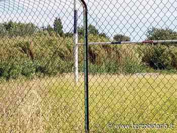 Il campo da rugby di Cerveteri abbandonato: erba alta ovunque - TerzoBinario.it