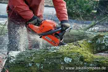 Sieben Bäume werden gefällt: In Xanten werden abgestorbene Gehölze entfernt - Xanten - Lokalkompass.de