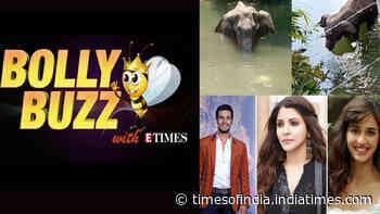 Bolly Buzz: Celebs condemn killing of a pregnant elephant; Nawazuddin's niece was sexually harassed?
