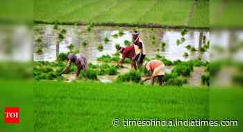 Govt approves amendment to Essential Commodities Act